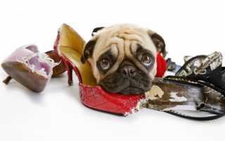 Кинолог психолог для собаки