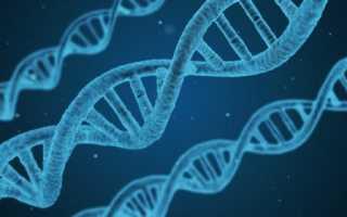 Для чего нужна генная инженерия