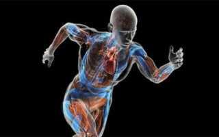 Биомеханика и медицинская инженерия