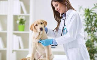Чем занимается ветеринарный врач