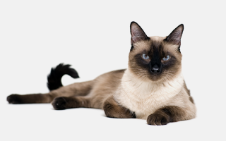 Кошачий психолог москва