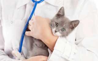 Что делает ветеринарный врач